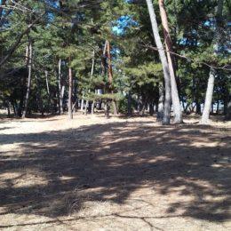 滋賀県栗東市 – 野洲川運動公園栗東側松林